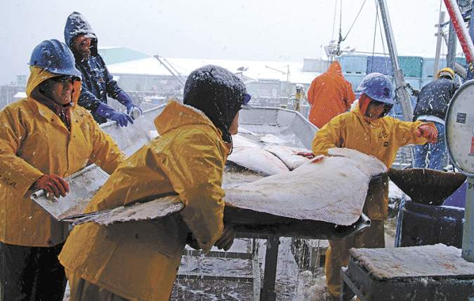Halibut fishing is cold, hard work, but lacks the TV-ready sex appeal of Alaskan crab. Courtesy of Lee van der Voo.