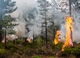 A pile burning operation in the Deschutes National Forest clears undergrowth to lessen the risk of megafire.