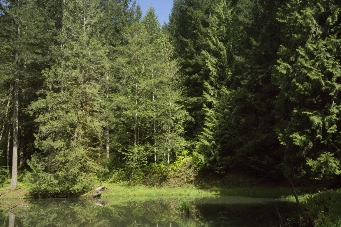 A family-owned forest outside Portland.