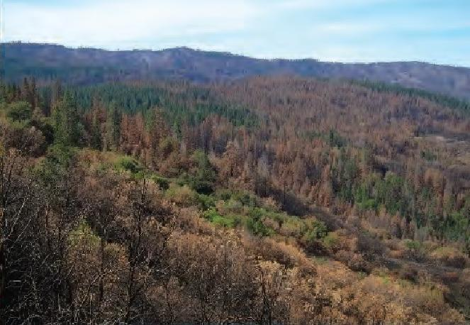 The wildfire conundrum: the climate effect