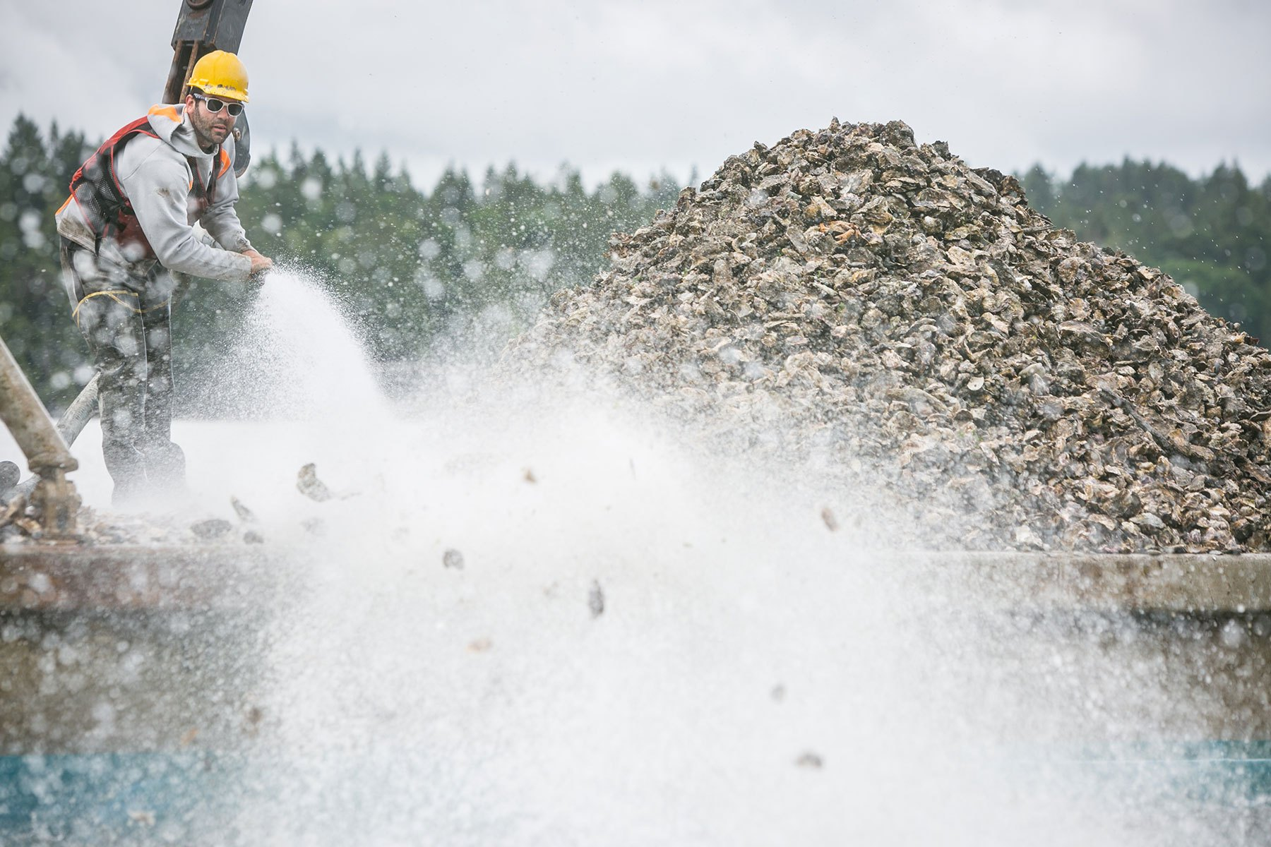 Climate change turns Puget Sound acidic and region's signature oysters struggle to survive