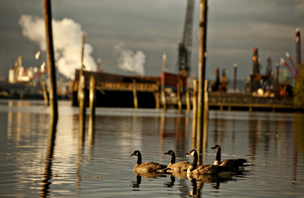 duwamish_seattle_habitat_restoration_urban_waterfront_contaminat