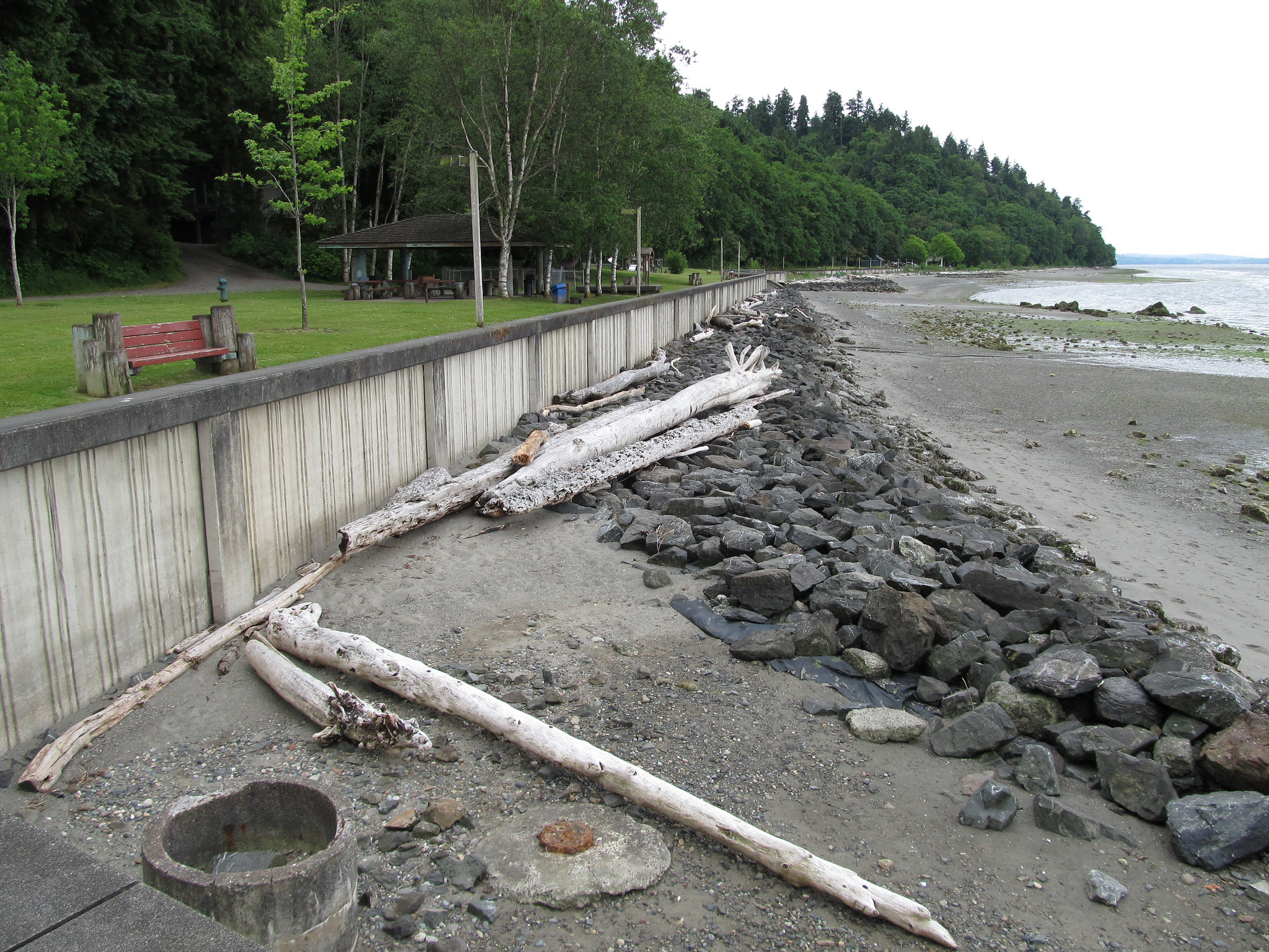 Senator: To help orcas and salmon, seawalls should be a last resort