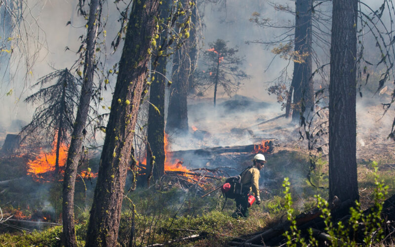 A firefighter uses an ignition tank to set underbrush on fire during a prescribed burn in Okanogan-Wenatchee National Forest near Liberty, Wash. It is part of an effort to get rid of the dried out underbrush that fuels wildland fires. (Photo: Dan DeLong/InvestigateWest)