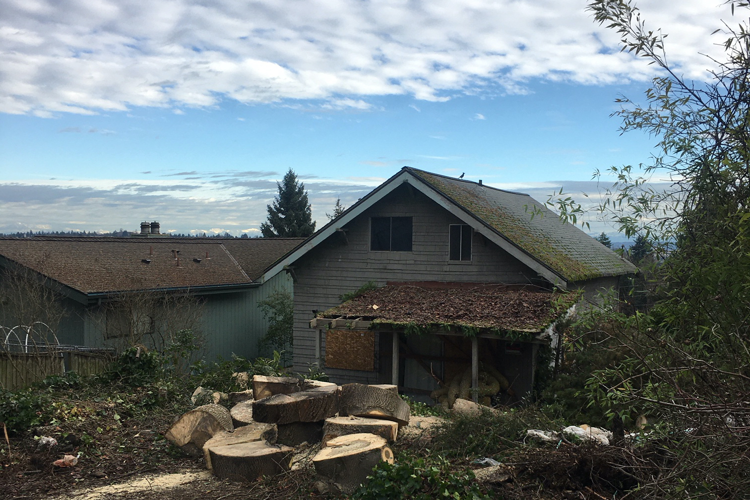 "Will ""murdered"" tree prod Seattle Council to pass long-promised protections?"