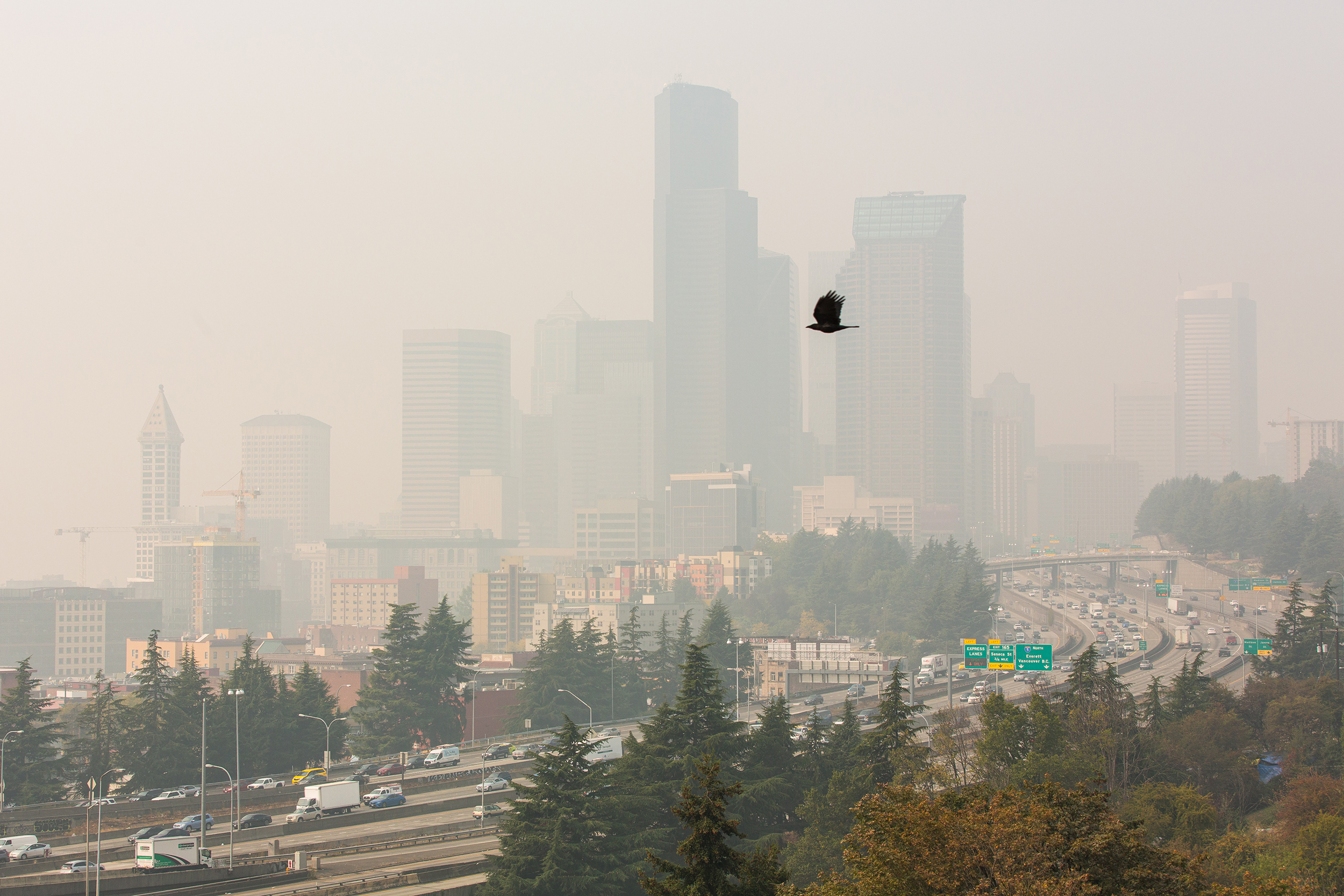 Exposure to heat and wildfire smoke may harm babies, unborn infants