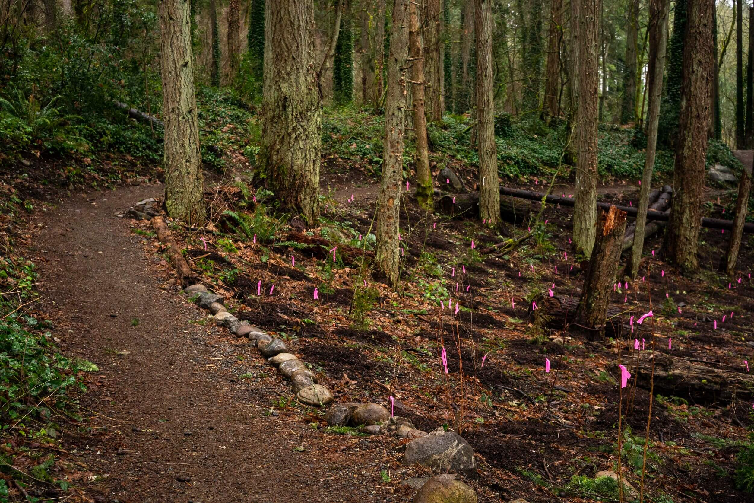 A forest, and in the middle of the photo, a scattering of tiny neon pink flags marking recently dug-up piles of dirt.