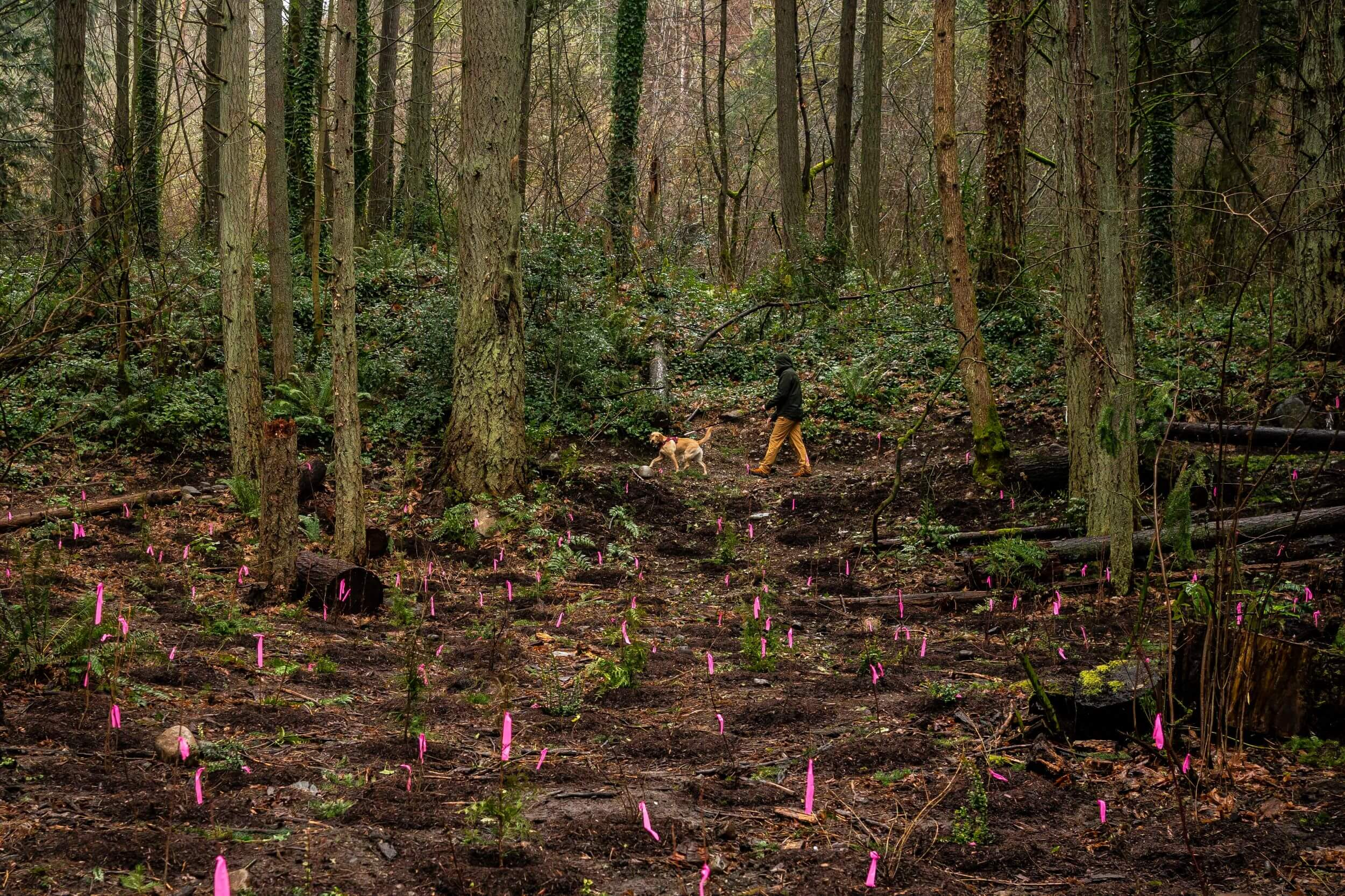 Tree justice? Lawmakers look to revive forests in Washington cities with eye on racial environmental disparities