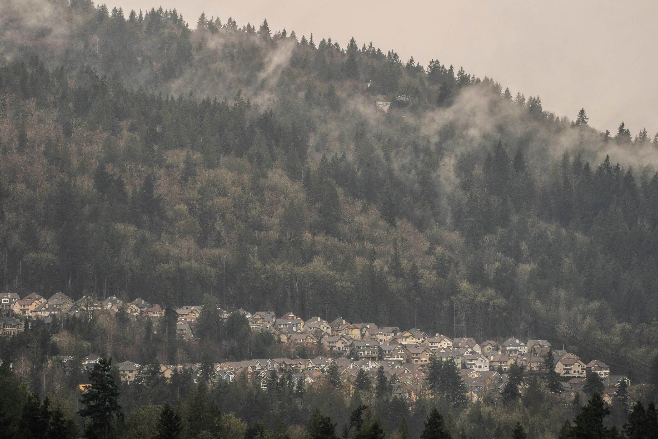 A foggy view of a hillside covered in trees and, below, residential houses.
