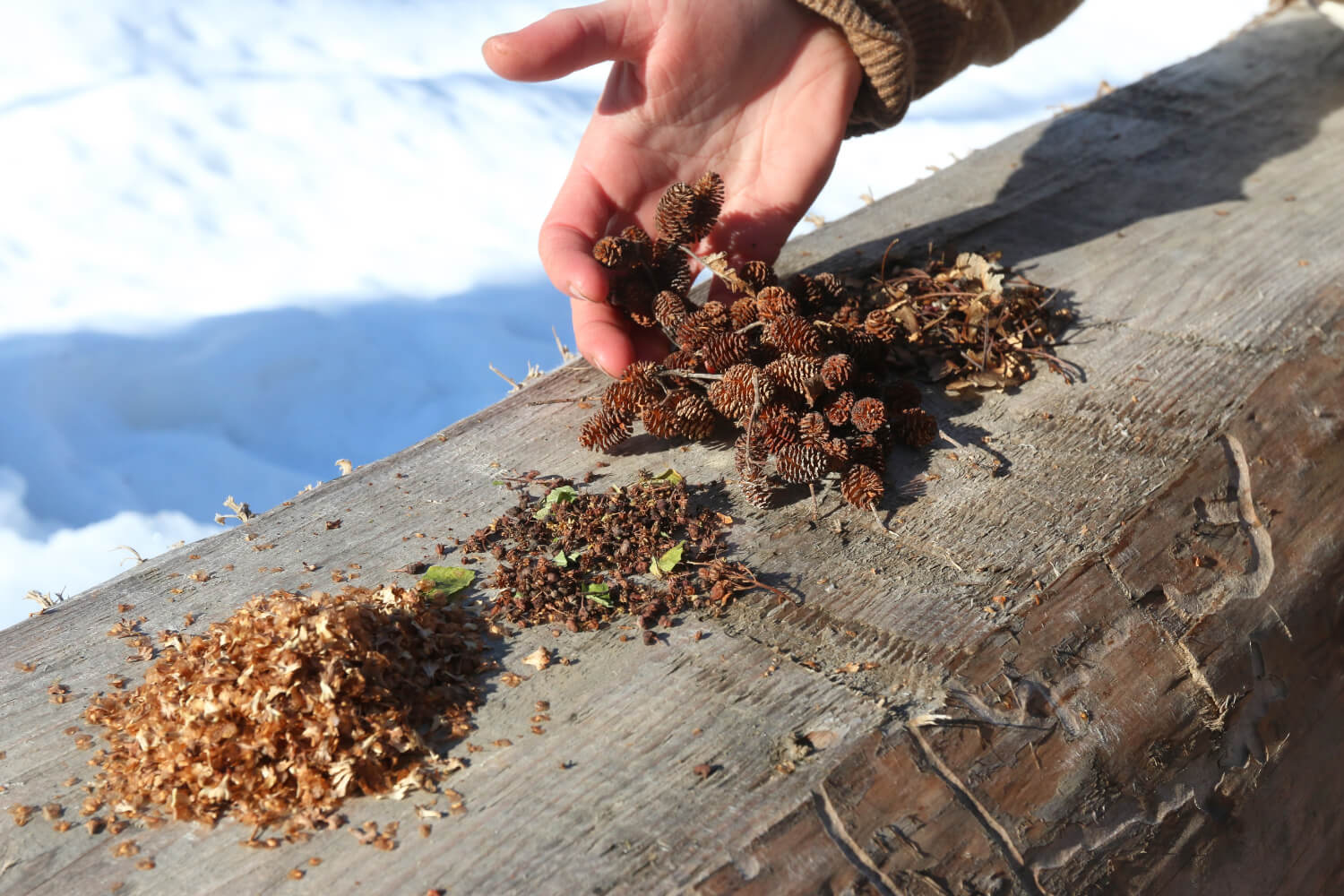 Seed the North: Fighting Climate Change, One Sprout at a Time