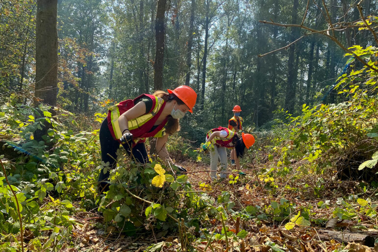 Three people in high-visibility vests and bright orange hard hats pull plants from the ground in a forest.